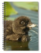 Baby Loon Spiral Notebook