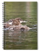 Baby Loons And Mom Spiral Notebook