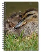 Baby Mallard Spiral Notebook
