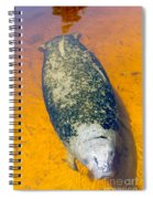 Baby Manatee Spiral Notebook