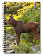 Baby Moose Baxter State Park Spiral Notebook
