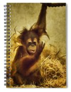 Baby Orangutan At The Denver Zoo Spiral Notebook