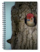 Baby Red Bellied Woodpecker Spiral Notebook