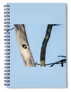 Baby Red-headed Woodpecker Spiral Notebook