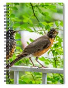 Baby Robin - Ready...just Do What I Do Spiral Notebook