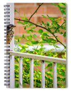 Baby Robin - Such A Big World Spiral Notebook