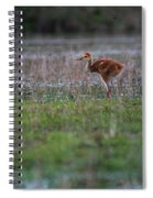 Baby Sandhill Spiral Notebook