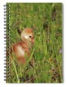 Baby Sandhill Crane Chick Spiral Notebook