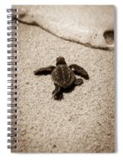 Baby Sea Turtle Spiral Notebook