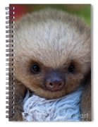 Baby Sloth Spiral Notebook