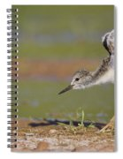 Baby Stilt Stretching Its Wings Spiral Notebook