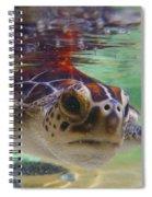 Baby Turtle Spiral Notebook