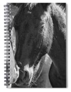 Bachelor Stallions - Pryor Mustangs - Bw Spiral Notebook