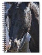 Bachelor Stallions - Pryor Mustangs Spiral Notebook