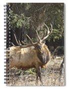 Back Scratcher Spiral Notebook