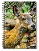 Back-tail Doe Spiral Notebook