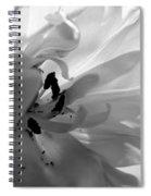 Backlit Black And White Tulip Spiral Notebook