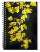 Backlit Leaves Of Autumn Spiral Notebook