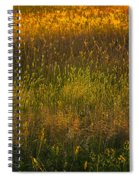 Backlit Meadow Grasses Spiral Notebook