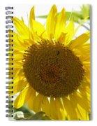 Backlit Sunflower Spiral Notebook