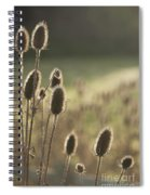 Backlit Teasel Spiral Notebook