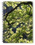 Backlit Tree Spiral Notebook
