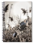 Backlit Winter Reeds Spiral Notebook