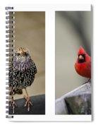 Backyard Bird Set Spiral Notebook