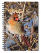 Backyard Birds Female Nothern Cardinal Square Spiral Notebook