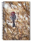 Backyard Birds Male House Finch Spiral Notebook