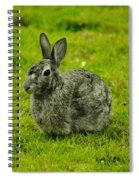 Backyard Bunny In Black White And Green Spiral Notebook