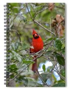 Backyard Cardinal In Tree Spiral Notebook