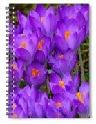 Backyard Crocus Spiral Notebook