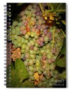Backyard Garden Series -hidden Grape Cluster Spiral Notebook