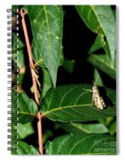 Backyard Hopper Spiral Notebook