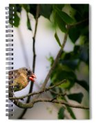 Bad Hair Day-female Northern Cardinal Spiral Notebook