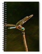 Balancing Dragonfly Spiral Notebook