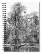 Bald Cypress Swamp In Black And White Spiral Notebook
