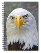 Bald Eagle 2 Spiral Notebook