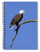 Bald Eagle 4 Spiral Notebook