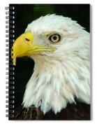 Bald Eagle-42 Spiral Notebook