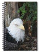 Bald Eagle #3 Spiral Notebook
