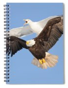 Bald Eagle And Greater Black-backed Gull Spiral Notebook
