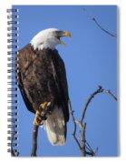 Bald Eagle Calling Spiral Notebook