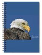 Bald Eagle Closeup Spiral Notebook