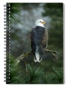 Bald Eagle In Tree Spiral Notebook