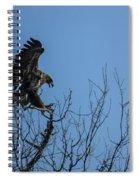 Bald Eagle Juvenile Landing In Tree Top Spiral Notebook