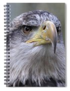 Bald Eagle - Juvenile Spiral Notebook