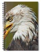 Bald Eagle... Spiral Notebook