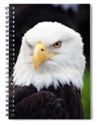 Bald Eagle - Power And Poise 02 Spiral Notebook